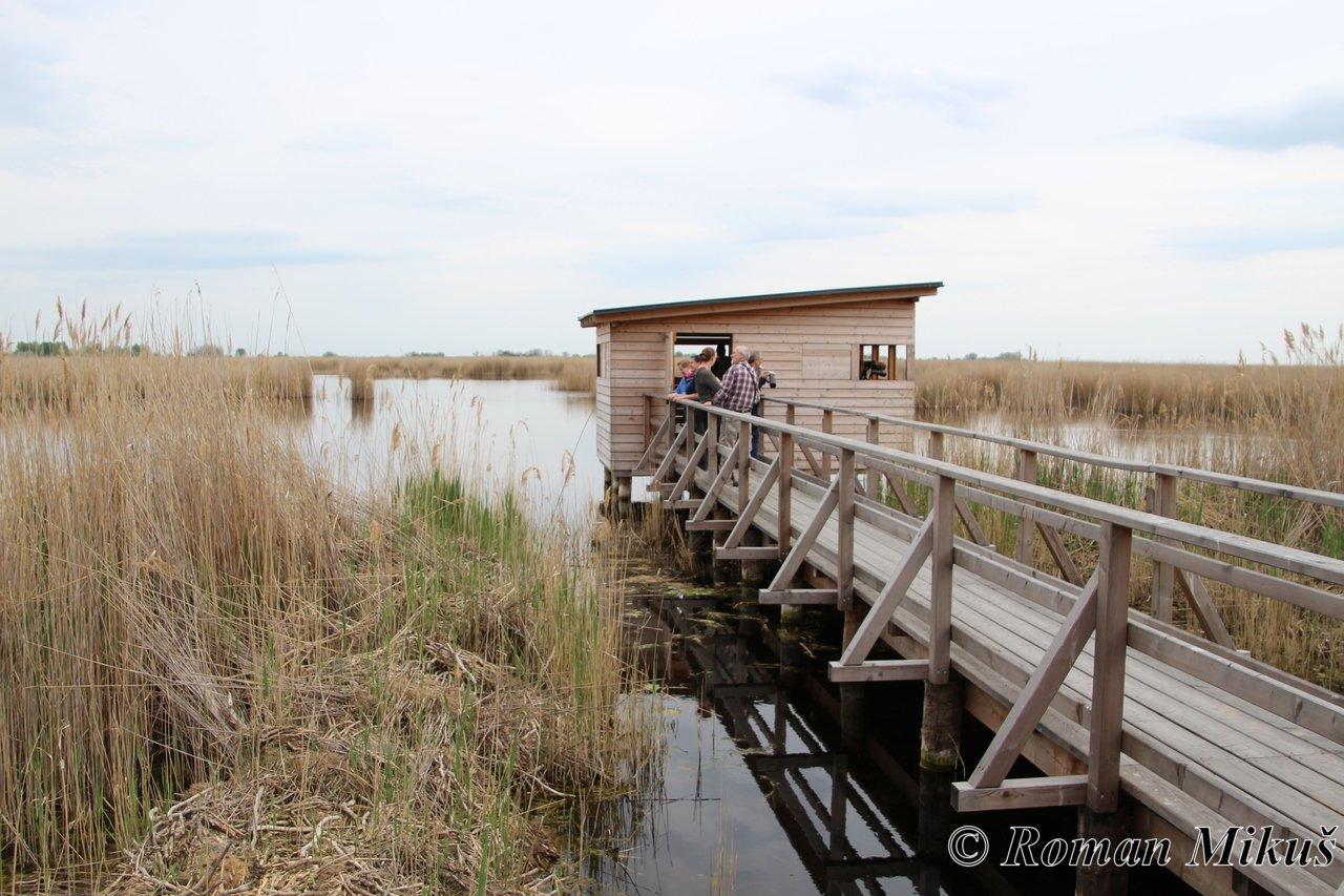 Neziderské jezero a Bird Experience 2018