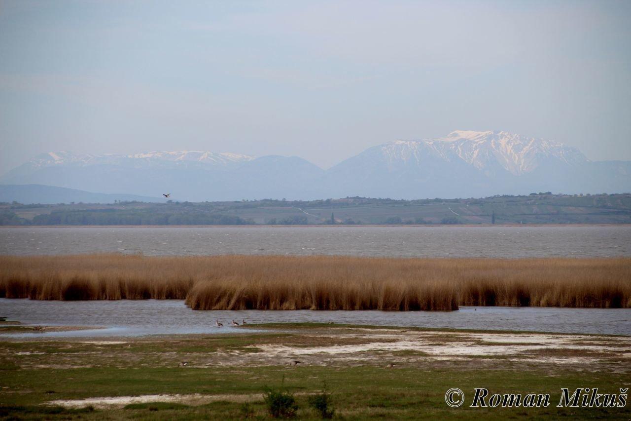 Neziderské jezero a Bird Experience